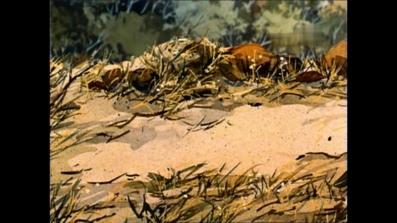 Серебряный конь 10.A.Wombat.on.the.road.(Vombat.na.doroge)