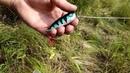 Ловля щуки в старице реки Плюсса на поверхностные приманки
