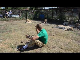 Репортаж среди львов для прессы ! Тайган