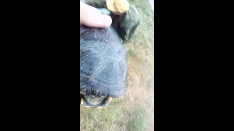 Зеленовский район рыбалка с Вованом поймали черепаху