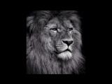 Сильный нашид  - дух храбрости