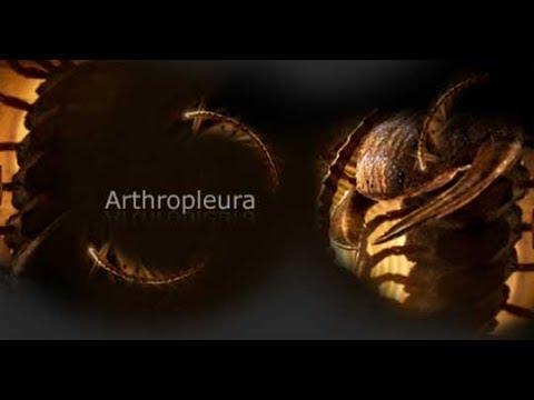 Primeval - Giant Arthropleura