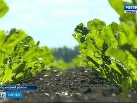 Петровский: из совхоза- в агрокомплекс - Вести 24