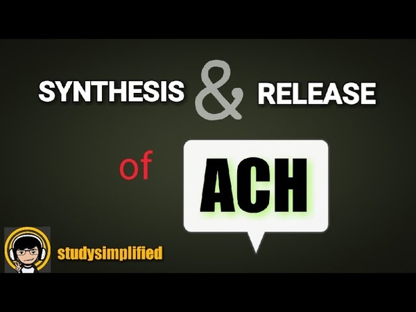 Synthesis and release of acetylcholine (ACH)