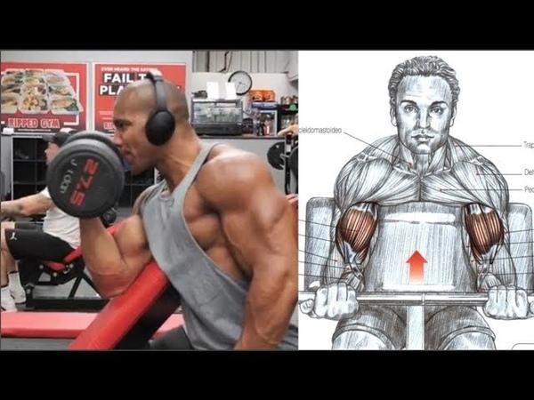 13 Ejercicios para Mejorar y Agrandar tus Biceps