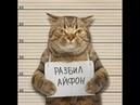 ЛУЧШИЕ ПРИКОЛЫ с котами 2018! Самые смешные видео про кошки и коты. Подборка приколов