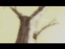 AKATSUKI GANG ft. $UICIDEBOY$