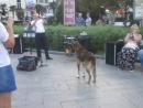 Ялтинская набережная (6.09.2018) Музыкант и его поющая собака