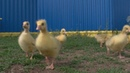 У границ Башкирии выявили птичий грипп
