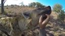 Crazy Hyenas   The Lion Whisperer