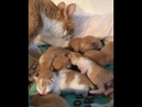 Rescued farm cat Happy and her kittens