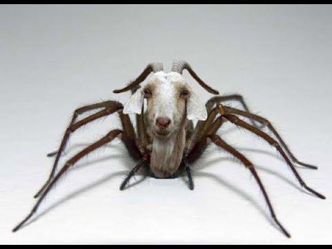 ГМО.Зачем козу скрестили с пауком.Что на самом деле мы едим.Документальный фильм