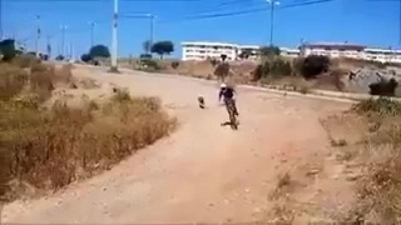 .webm <Собака не допрыгнула>