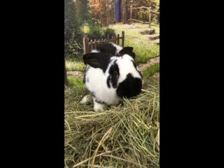 Кролик Крош 🐇🥕❤️