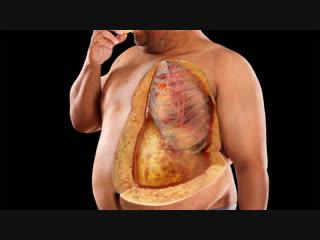 Ваше здоровье. Ожирение внутренних органов