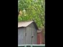 Голубь с хлебушком в Краснодаре