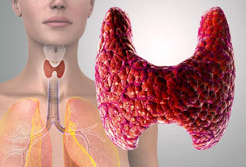 Метаболизм при заболевании щитовидной железы