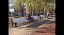 В Октябрьском районе открыли бульвар на Осипенко после ремонта по федеральному проекту Формирование комфортной городской среды. Он сразу стал любимым местом для отдыха. Жители признаются, детей на площадке, а мам и пап на скамейках много не то