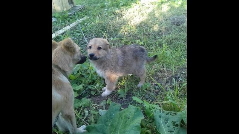 ЛГОО Помощь бездомным животным города Лысьвы