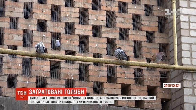 Жителі Бердянська замурували сотні голубів у стіну будинку