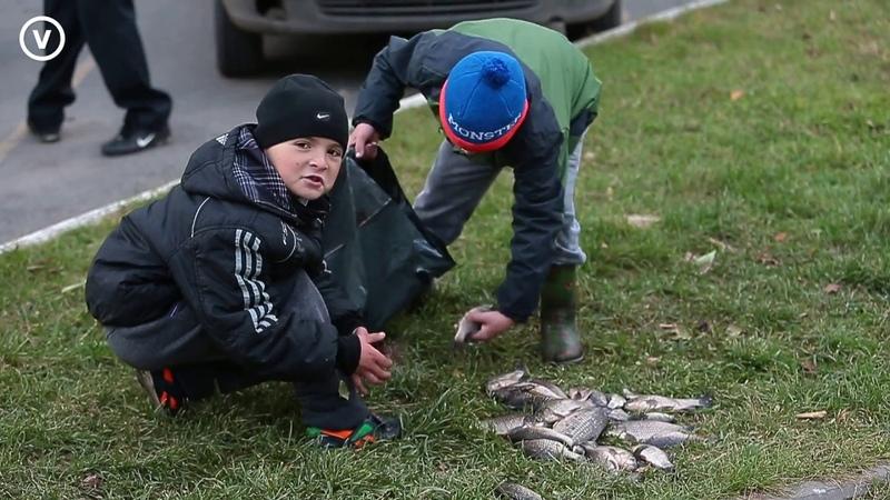 Рыба умирает в озере на окраине Томска