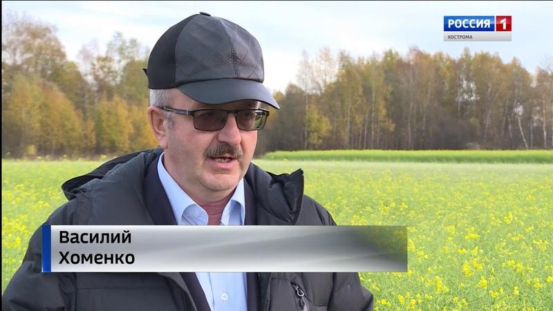 В СПК Родина в Костромской области завершают пастбищный сезон