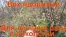 Вех лечит рак и онкологию сибирь тайга Лекарственные растения полей и лесов тихая охота грибы сбор