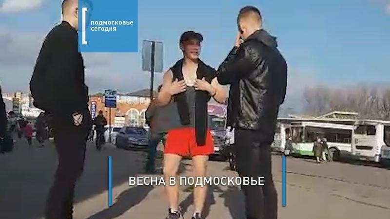 В ОДИНЦОВО по улицам щеголяет смельчак в красных шортах