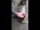 Смешной дядя и обезьяна