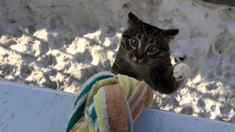 Кот домой пришел The cat came home