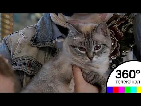 В Ильинском храме прошел первый в истории молебен по бездомным животным