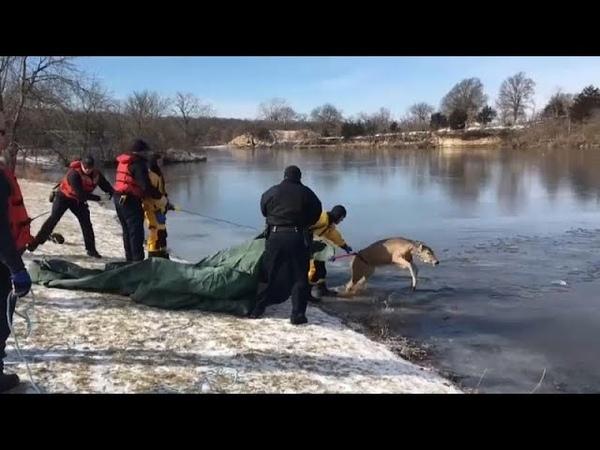 США: пожарные в Канзасе спасли оленя