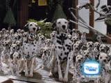 Художественный фильм «101 далматинец / 101 Dalmatians» и «102 далматинца / 102 Dalmatians» на Канале Disney!