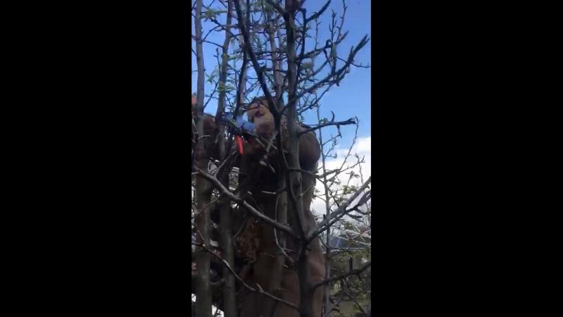 Лет 13-15 назад я так лазила по деревьям