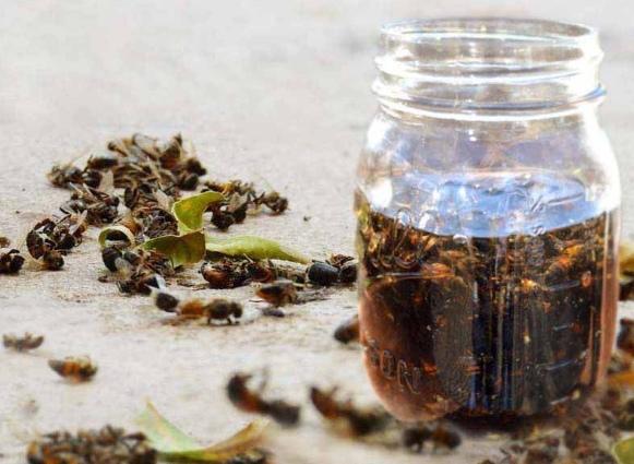 Настойка из пчелиного подмора — спасет от 100 болезней, даже онкологии…