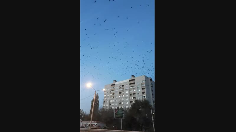 Воронеж. Налет