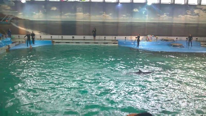 Дельфинарий. Крестовский остров