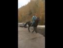 Лошадь в Алматы