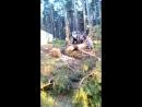 с Завьялово Вырубка леса в водоохранной зоне