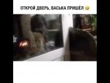 Говорящий кот. Открой дверь!