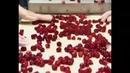 Как в Германии собирают вишню удаляют косточки и делают варенье на фабрике