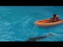 дельфинчики релакс 😍