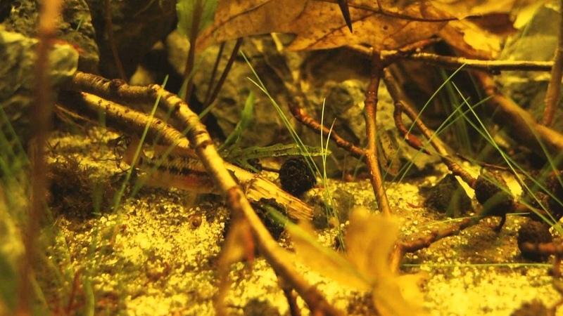 Blackwater   Amazon Biotop Aquarium   Part two