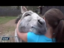 - Donkey seeing his favorite friend days later