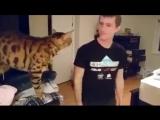 Очень общительный кот