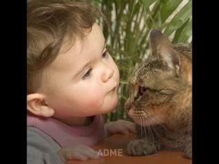 Наука рекомендует: заведите кота.