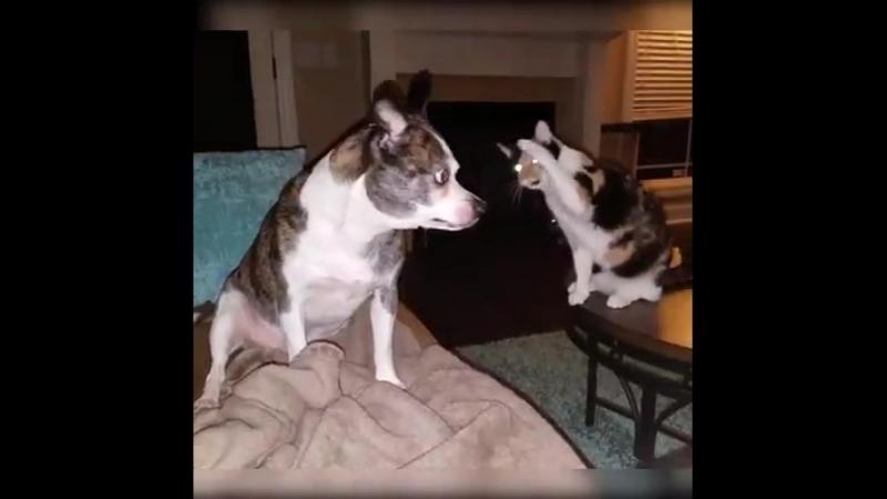 Котейка танцует для собаки