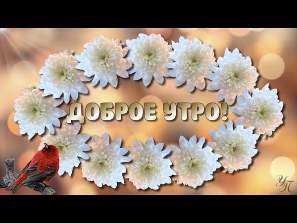 ДОБРОЕ УТРО! УДАЧНОГО ДНЯ! Красивое пожелание видео открытка