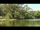 Bird Songs Relaxing - 2 Hours - Sound of Nature_001