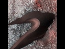 Марс никогда не был так близок и четок